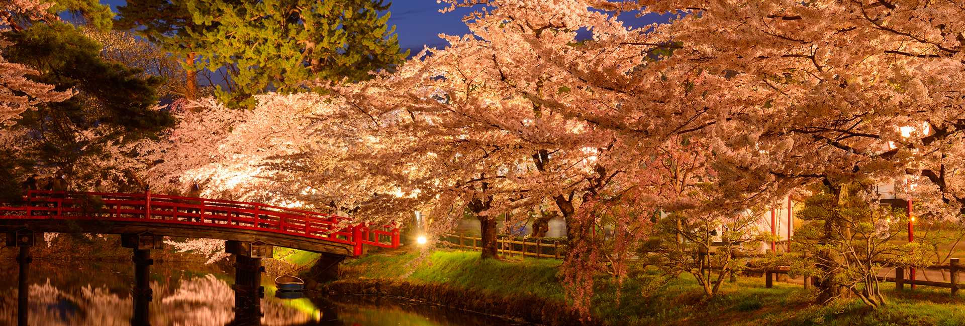 Hirosaki at night and cherry blossoms