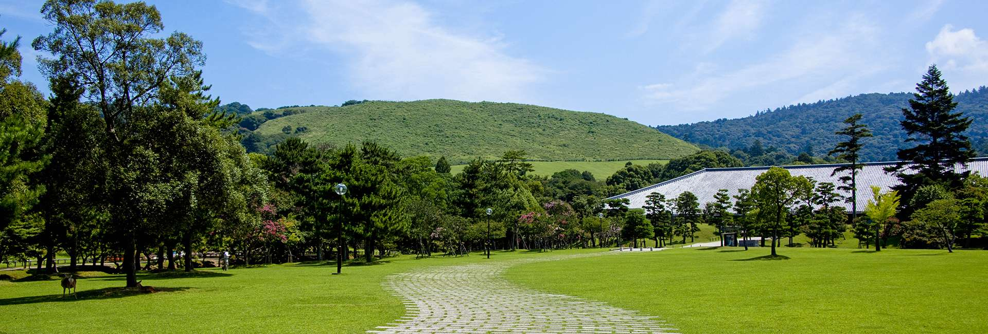 view on the park of Nara
