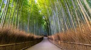 bambouseraie de Sagano