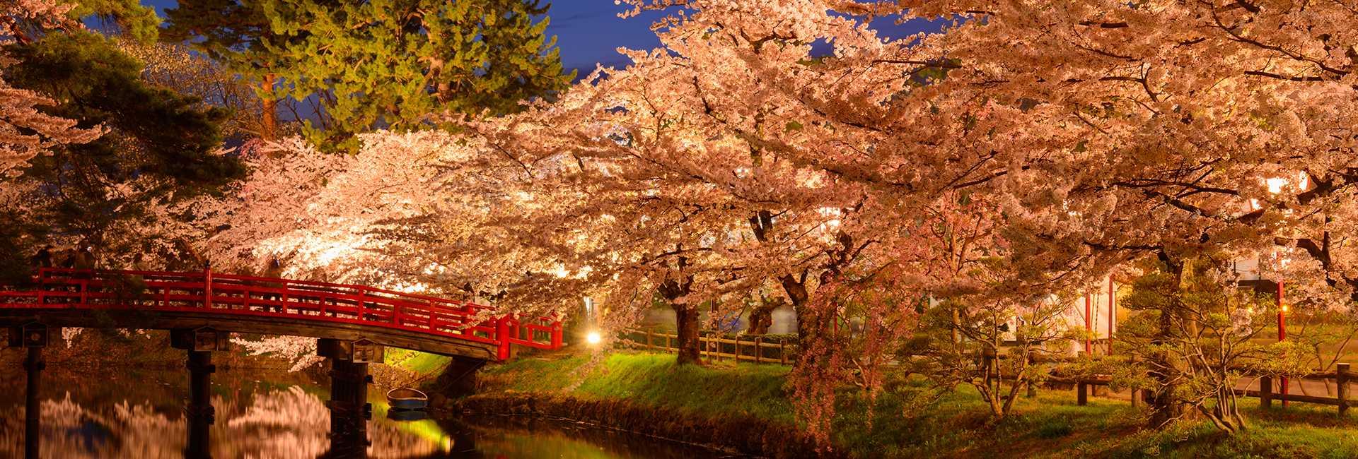 Hirosaki la nuit et cerisiers en fleurs