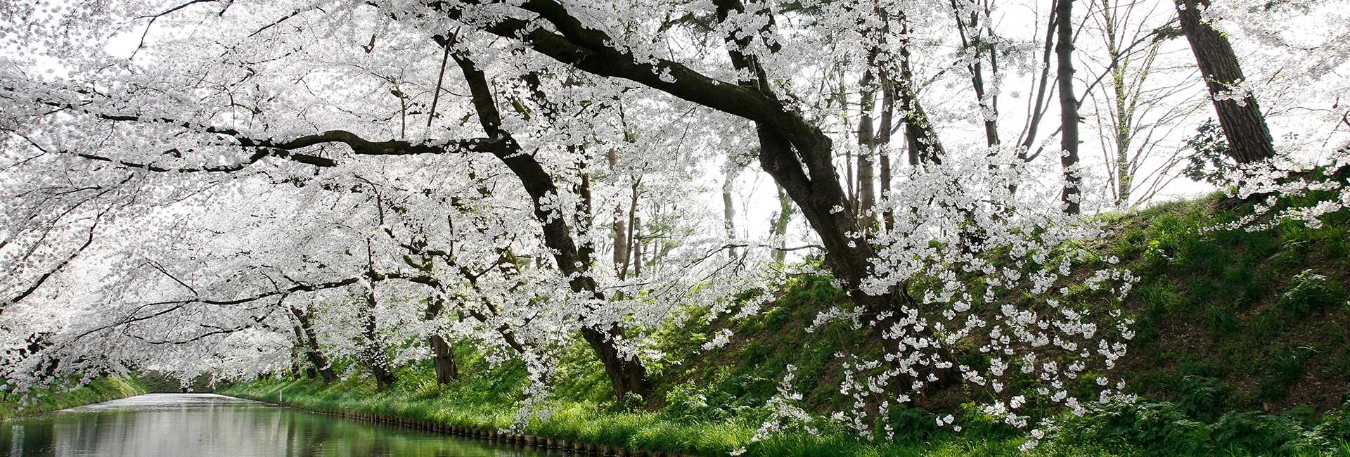 Hirosaki au Japon