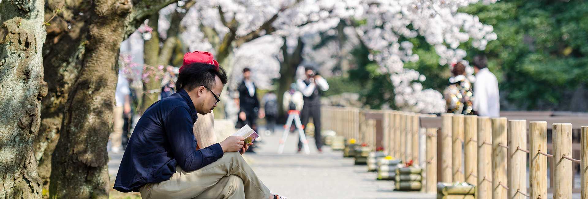 leggere sotto un albero di ciliegi in fiore a Kanazawa